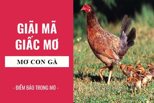 Giải mã giấc mơ: Nằm mơ thấy con gà điềm báo gì, lành hay dữ? con số liên quan