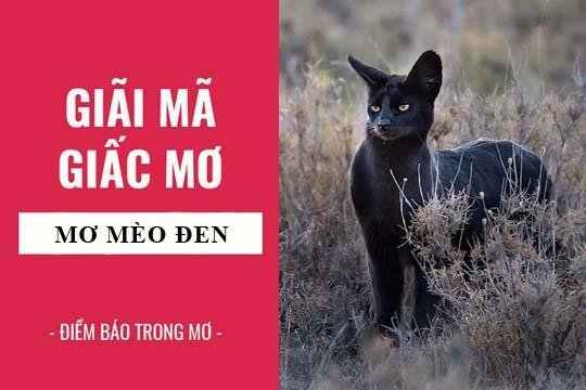 Giải mã giấc mơ: Nằm mơ thấy mèo đen điềm báo gì, lành hay dữ? con số liên quan