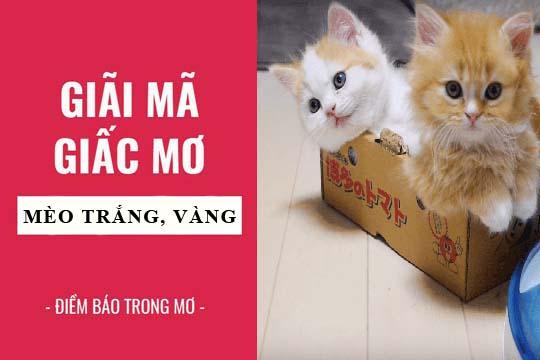 Giải mã giấc mơ: Nằm mơ thấy mèo trắng, vàng, mèo mướp điềm báo gì, lành hay dữ? con số liên quan