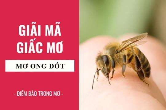 Giải mã giấc mơ: Nằm mơ thấy ong đốt điềm báo gì, lành hay dữ? con số liên quan